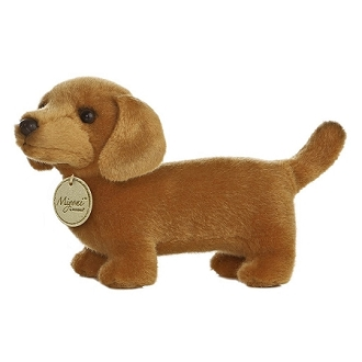 Brown Dachshund 8